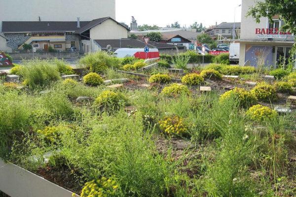 Façades et toitures végétalisées - Association CONVIVE pour un environnement COnstruit VIvant et VErt