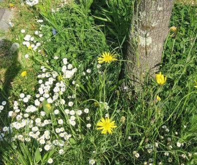Arbres, haies et animaux - Association CONVIVE pour un environnement COnstruit VIvant et VErt